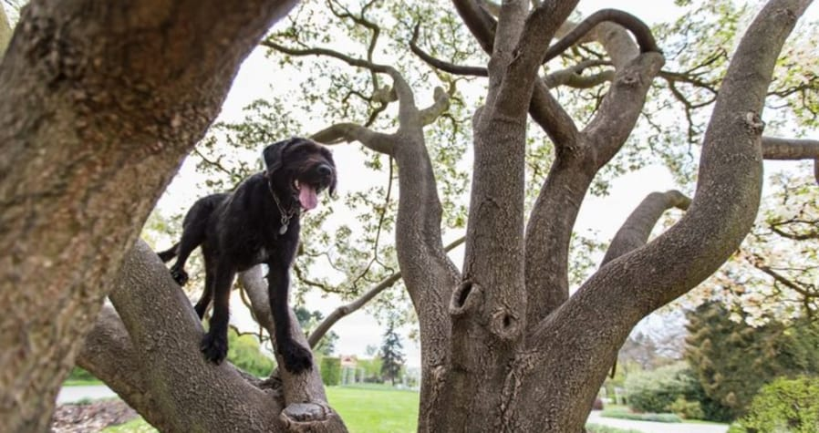 dog in tree