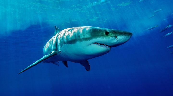 Is Shark Tank Syndrome Stifling Your Success?
