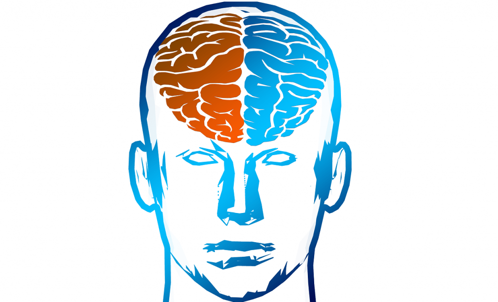cartoon head with red and blue brain